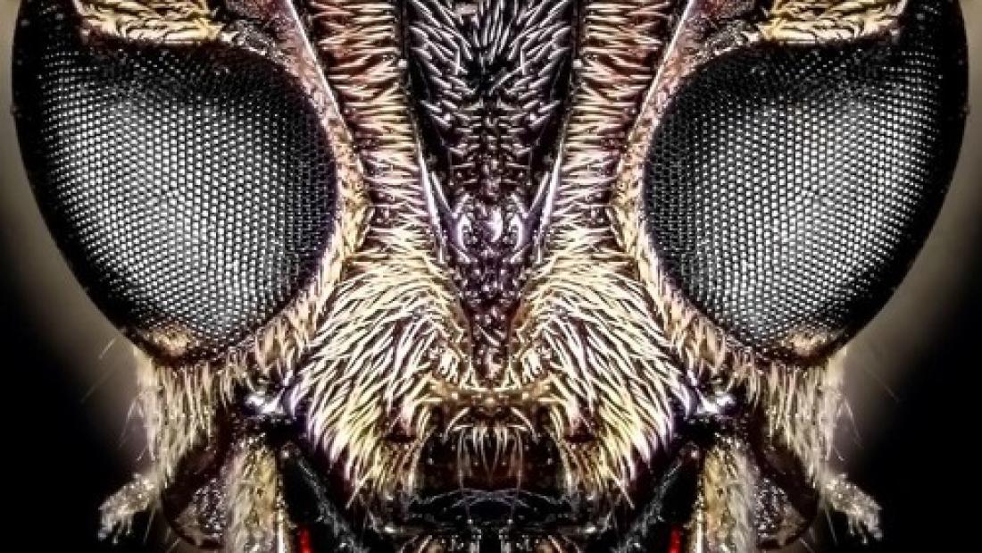 artworks-000362180037-5rknw8-t500x500